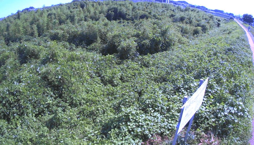 浅川16kp左岸