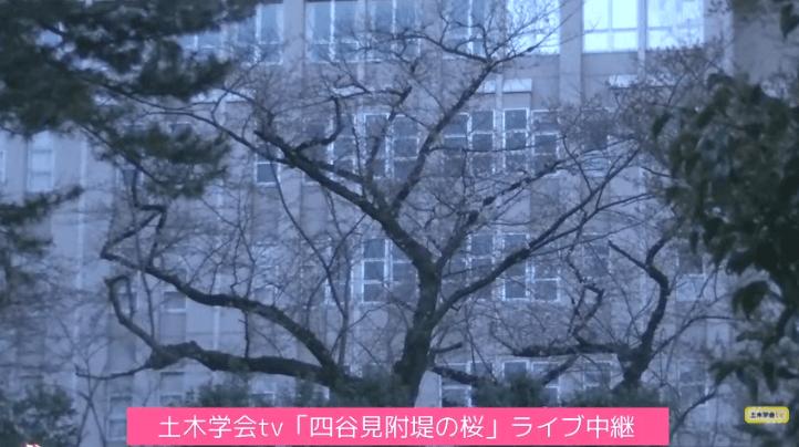 四谷見附堤の桜