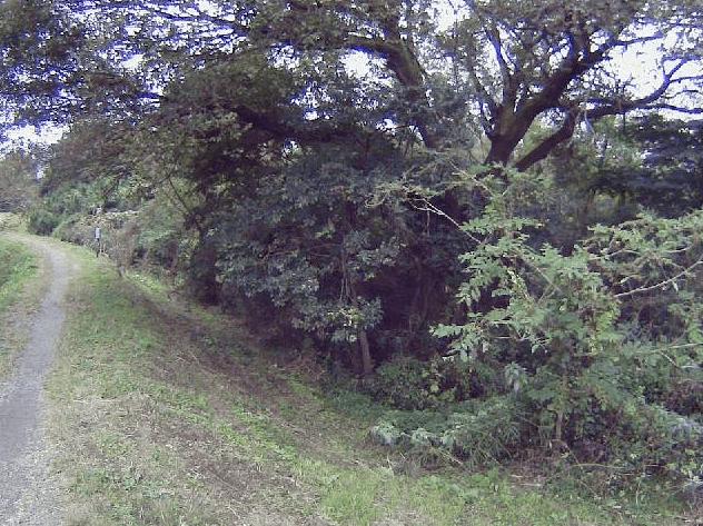 高麗川4.6KP右岸