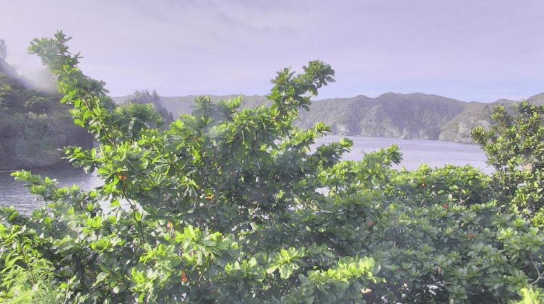 父島宮の浜