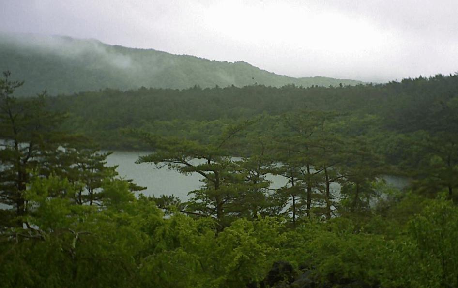西湖樹海富士山
