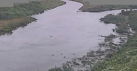 新河岸川砂観測局