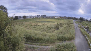砂川堀蛇島調整池