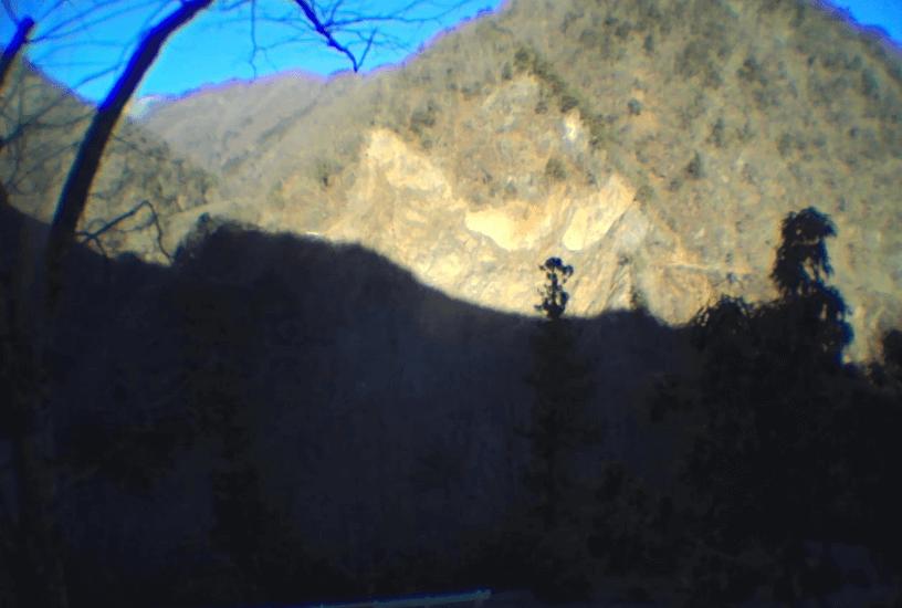 早川町黒桂